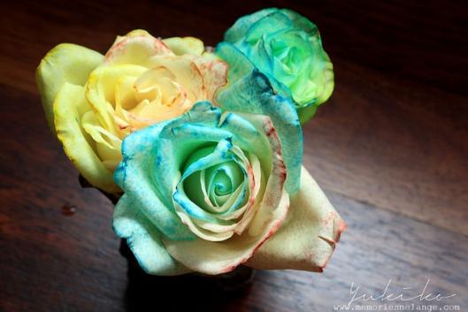 Pastel Rainbow Roses